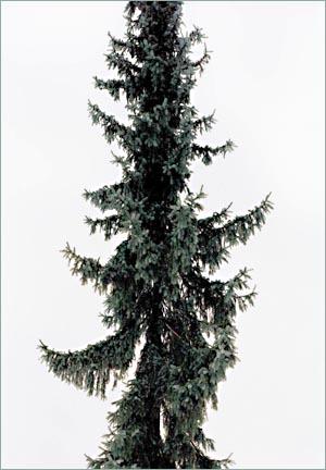 """Stefanie Seufert: """"Ohne Titel"""", 2007, Farbfotografie, 140 x 98 cm"""